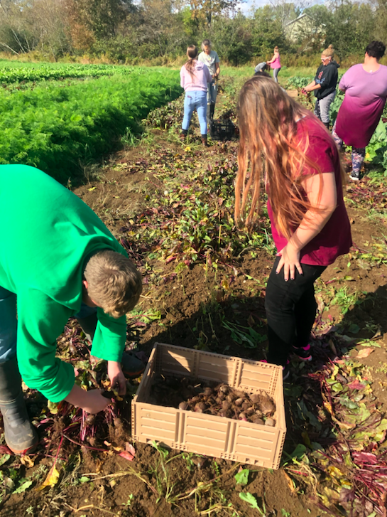 Students Gleaning at Folklore Farm
